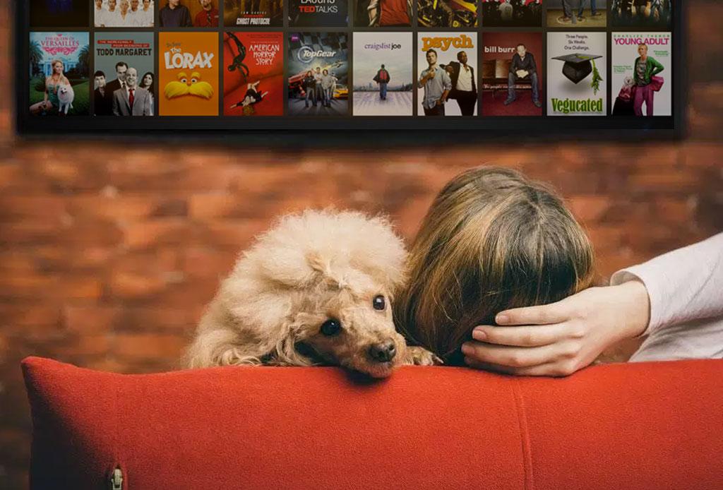 Los gatos y los perros son la mejor compañía para ver series, según Netflix