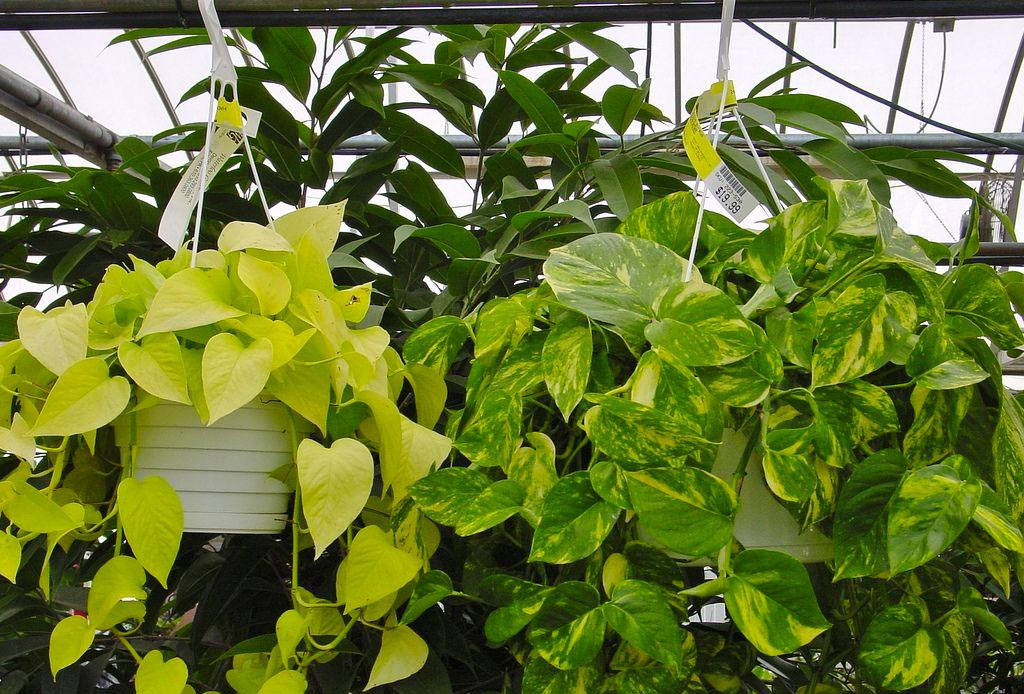 La planta ideal para cada tipo de habitación - plantas_cuarto_6