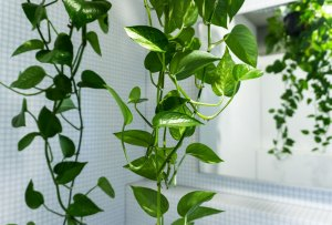 La planta ideal para cada tipo de habitación