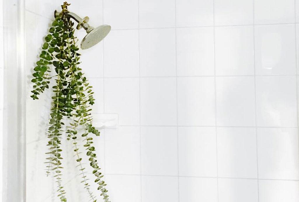 8 formas de olvidarte de un mal día - bano-eucalipto-beneficios-salud-2-1024x694