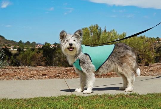 Estas prendas evitarán que tu perro sufra con el calor - chalecoperro1-300x203