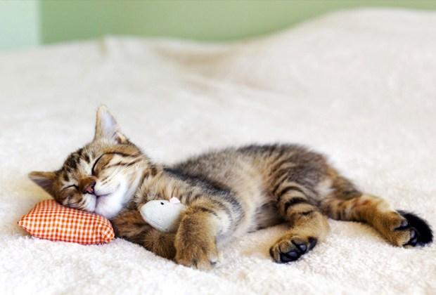 Las apps de juego y aprendizaje que tu gato amará - despertador-gatos-1024x694
