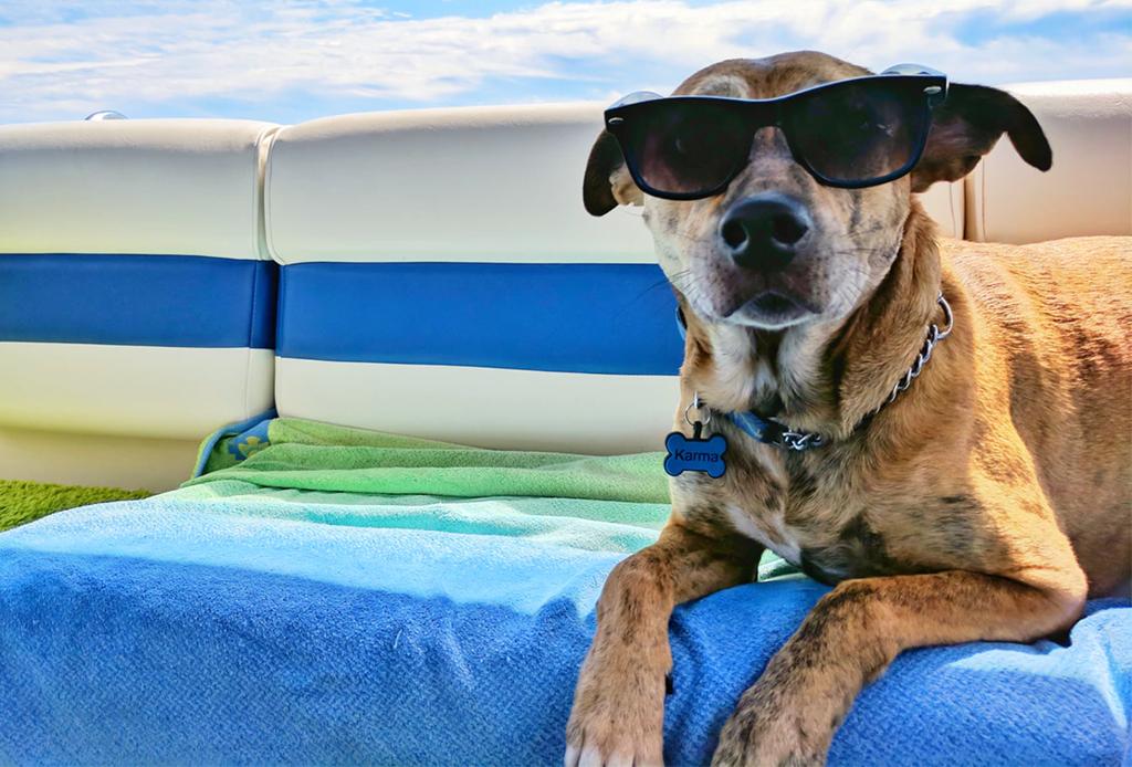 ¿Quieres viajar con tu mascota? Estos son los hoteles en México dónde los aceptarán