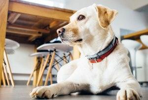 Lo que tienes que saber de la edad de tu perro y las etapas de su vida