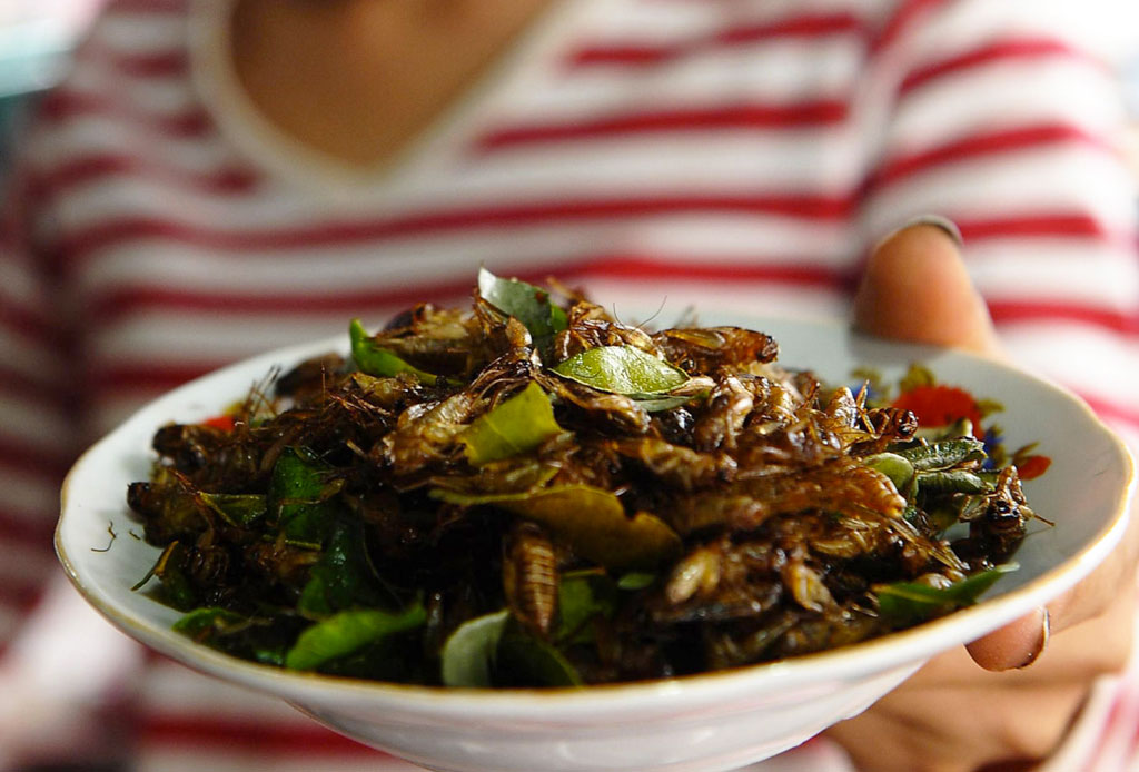 Comer insectos podría beneficiar tu salud más de lo que crees - comer-insectos-salud-estudio-3