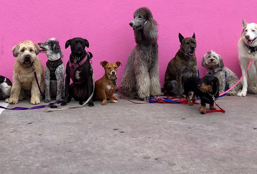 Estas son las 9 razas de perros más populares en el mundo