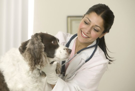 Remedios Caseros Para Calmar El Malestar Estomacal De Tu Perro