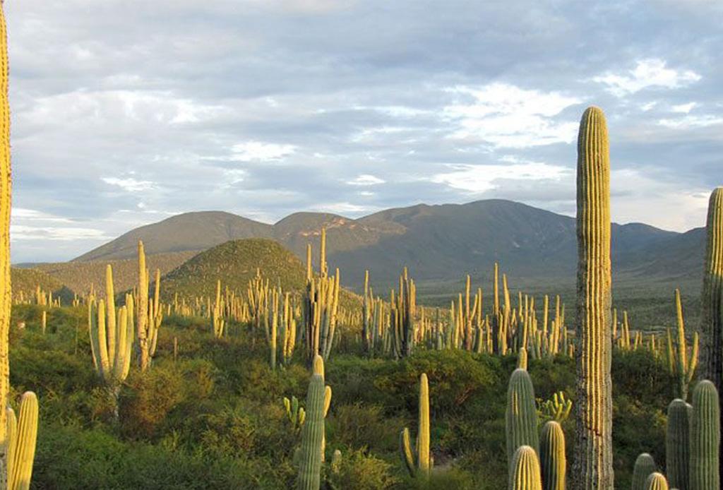 9 nuevos patrimonios culturales de la humanidad que debes visitar, ¡uno está en México! - unesco1