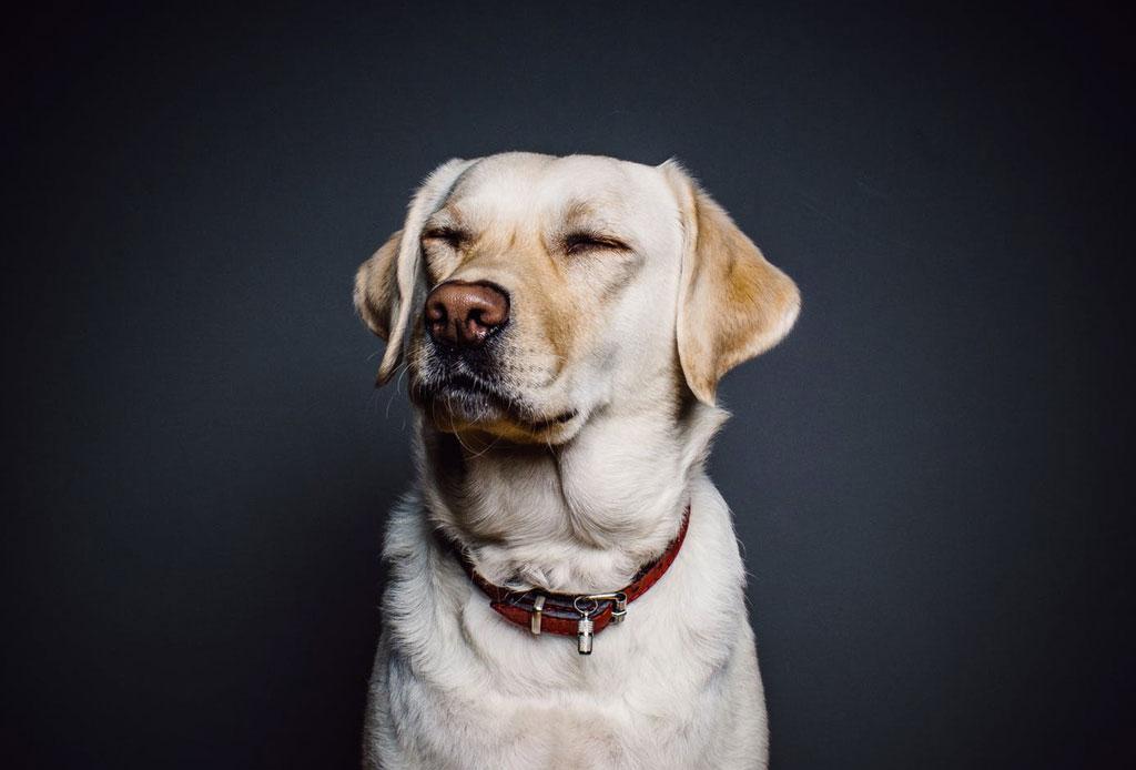Día del Perro en Artz Pedregal - perro-truenos-miedo-2