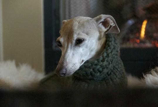 ¿Realmente tu perro necesita un suéter para el invierno? - razas-perros-vivir-departamento-6-300x203