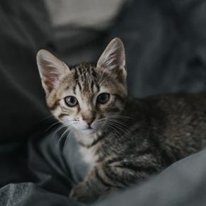 QUIZ: ¿Qué canción de Coldplay eres? - gato-1