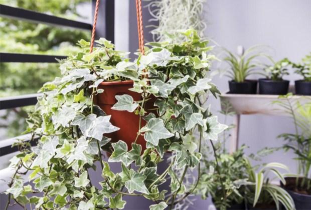 Plantas que ayudan a purificar el ambiente de tu casa - plantasinterior1-1