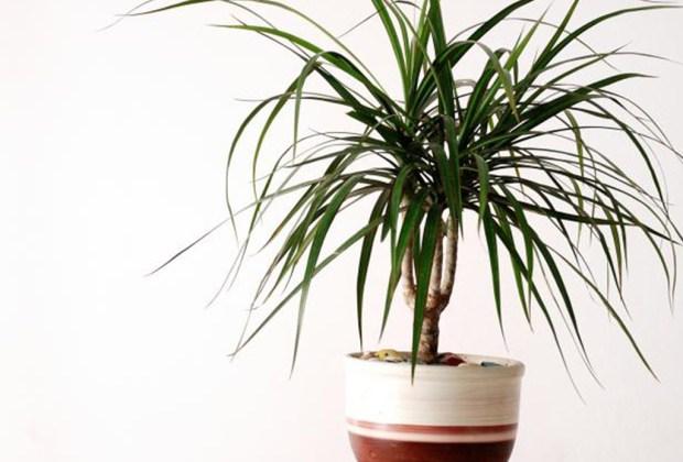Plantas que ayudan a purificar el ambiente de tu casa - plantasinterior5-1