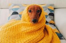perritos frio 1