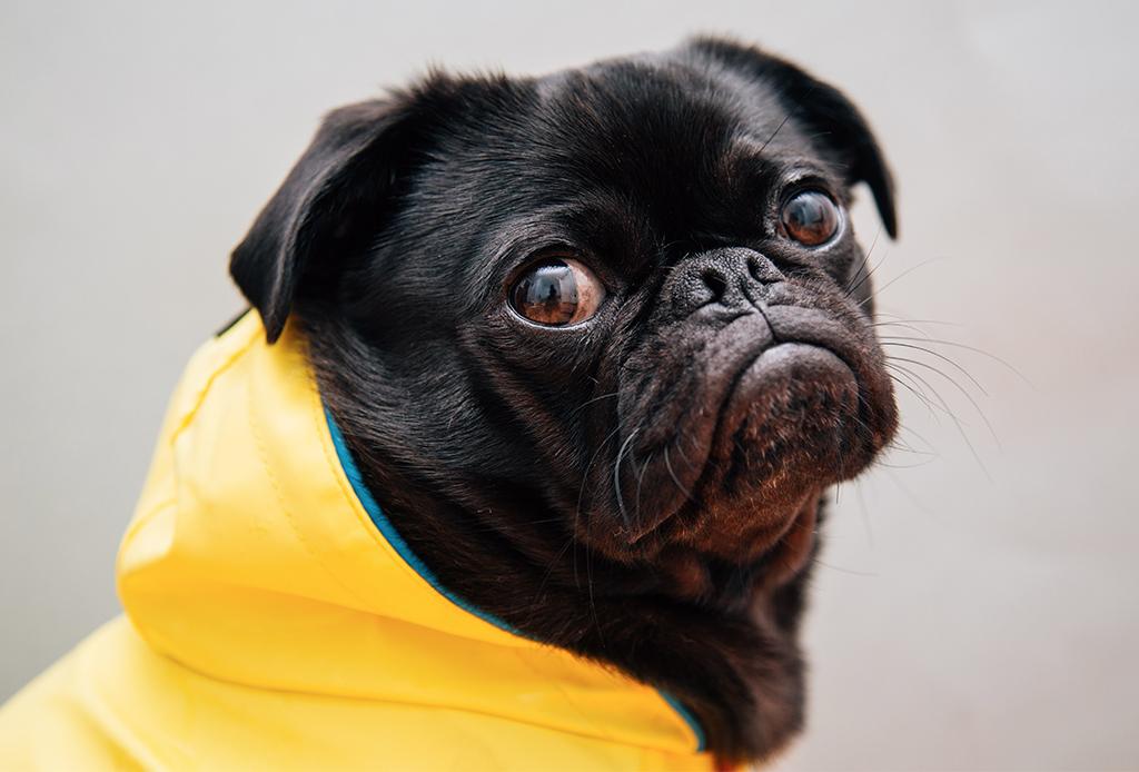 Cuida de tu perrito en el invierno con estos consejos - perritos-frio-2