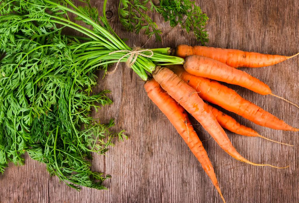 Estos son los alimentos que sí le puedes dar a tu perro sin riesgos - tan-zanahoria-1024x694