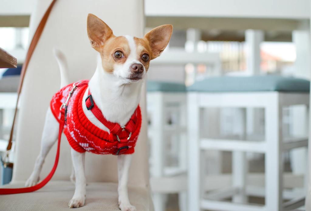 Convierte tu departamento en el lugar ideal para tu perro