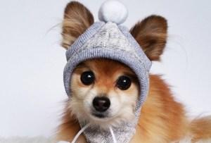 6 sombreros para perrito muy cool y que lo protegerán del frío