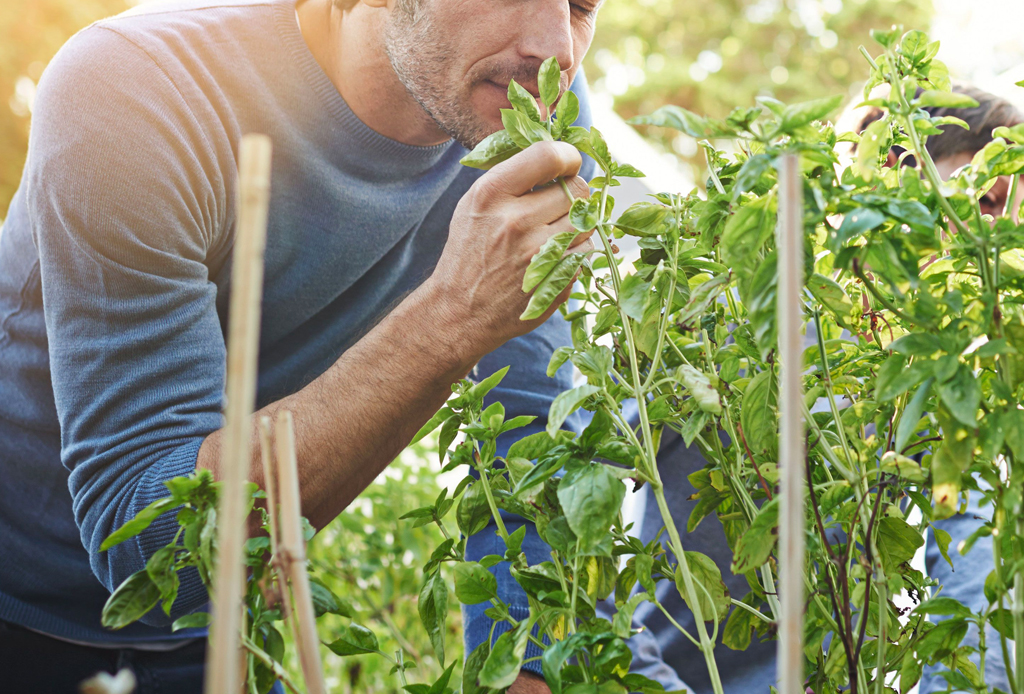 Oler comida puede ayudarte a adelgazar