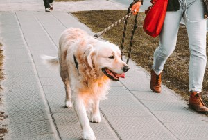 Los mejores lugares para pasear a tu perro en la CDMX