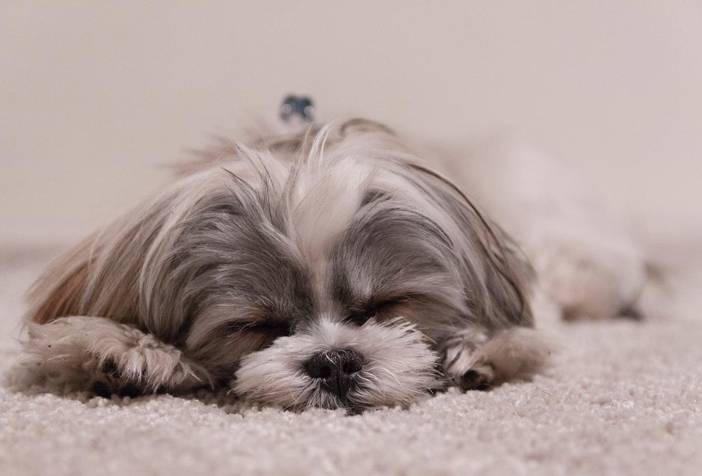 ¿Qué dice el comportamiento de tu perro sobre ti? - personalidad-perros-2