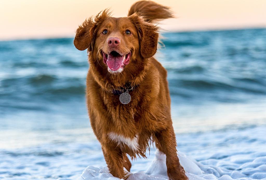 ¿Qué dice el comportamiento de tu perro sobre ti? - personalidad-perros-3