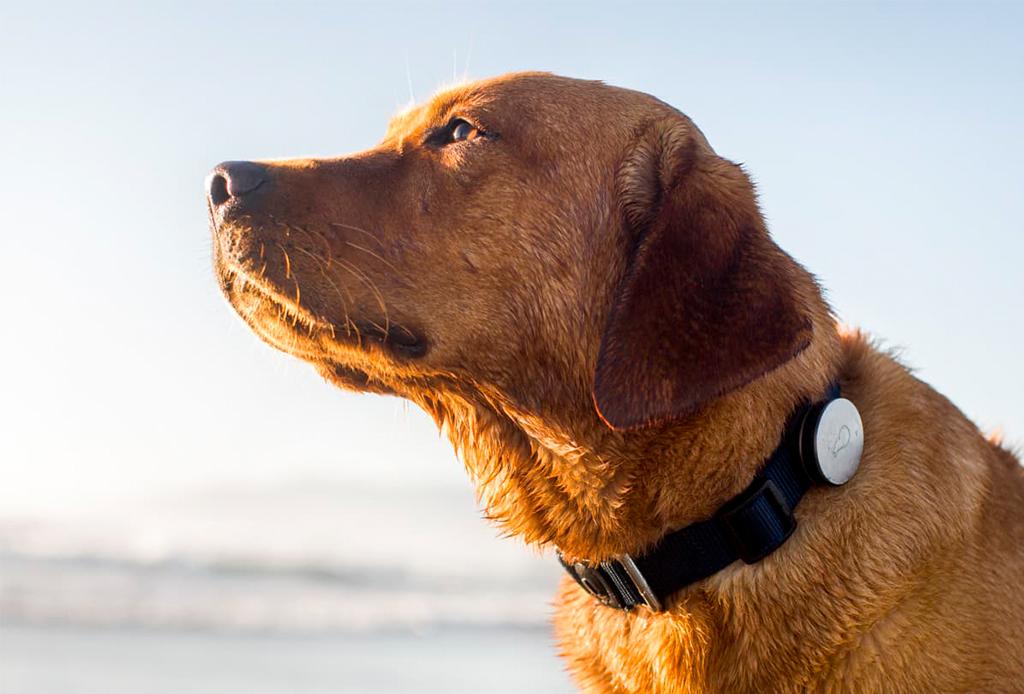 8 reglas que debes seguir para criar a un perro sano y saludable - reglas-cuidar-perro-8