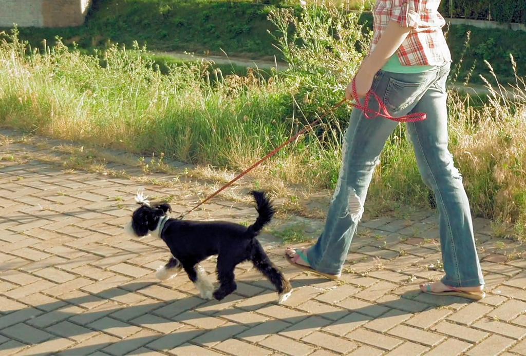 7 pasos para educar a tu perro a que camine/corra a tu lado - caminar-con-perro-6