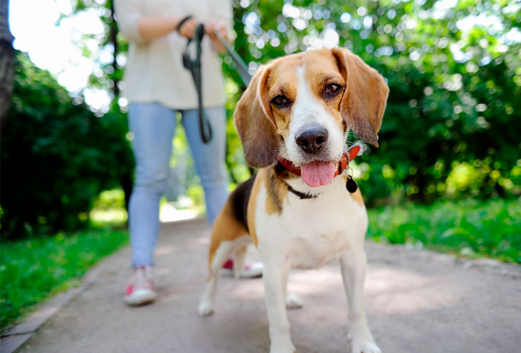 7 pasos para educar a tu perro a que camine/corra a tu lado - caminar-con-perro-7