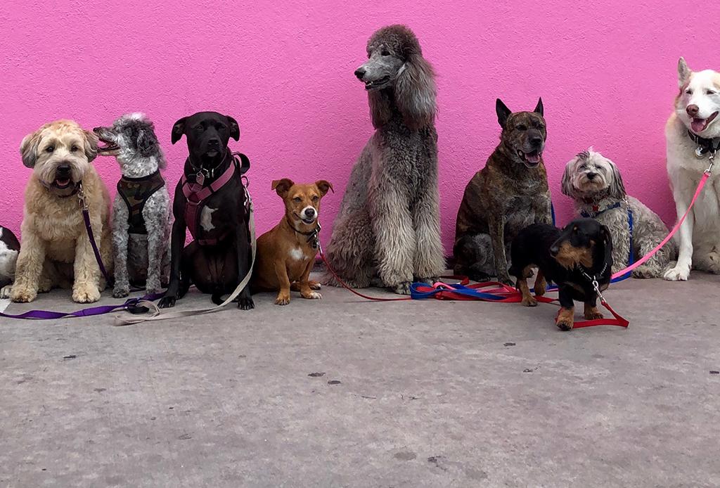 Terapia para perros, algo normal y necesario - perros-inteligentes-7