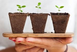 9 regalos adorables para amantes de las plantas