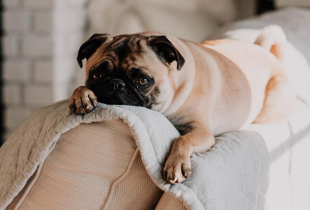 5 síntomas a los que debes poner atención para saber si tu perro está deprimido - depresion-cachorros-1