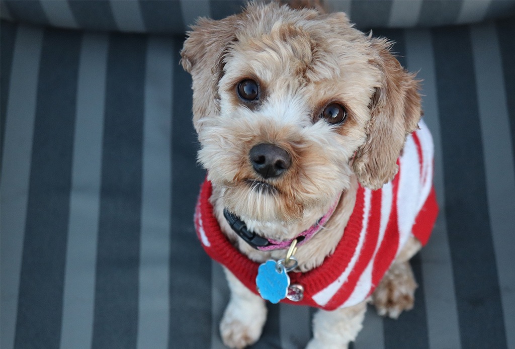 5 síntomas a los que debes poner atención para saber si tu perro está deprimido - depresion-cachorros-2