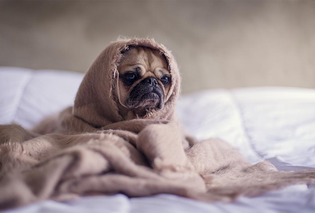 5 síntomas a los que debes poner atención para saber si tu perro está deprimido