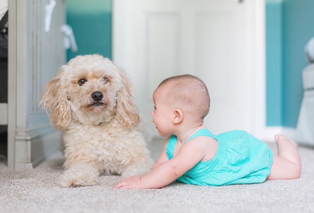 Prepara a tu mascota para la llegada de tu bebé - perritos-bebes-2