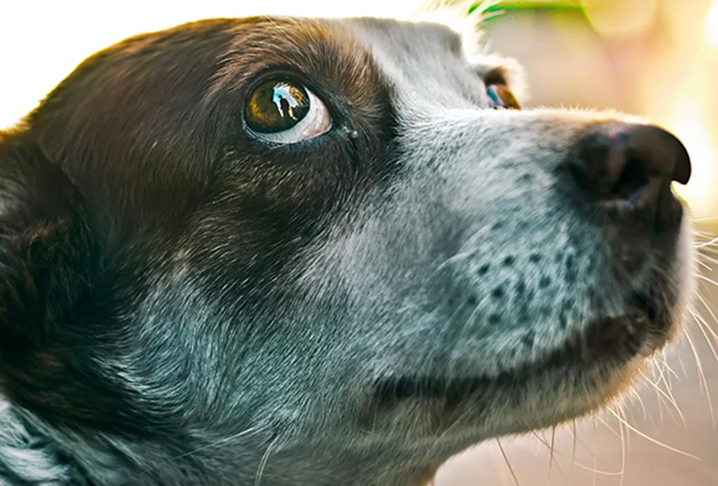Conoce mejor a tu perrito, aprende su su lenguaje corporal con estos consejos - corporal-perros-1