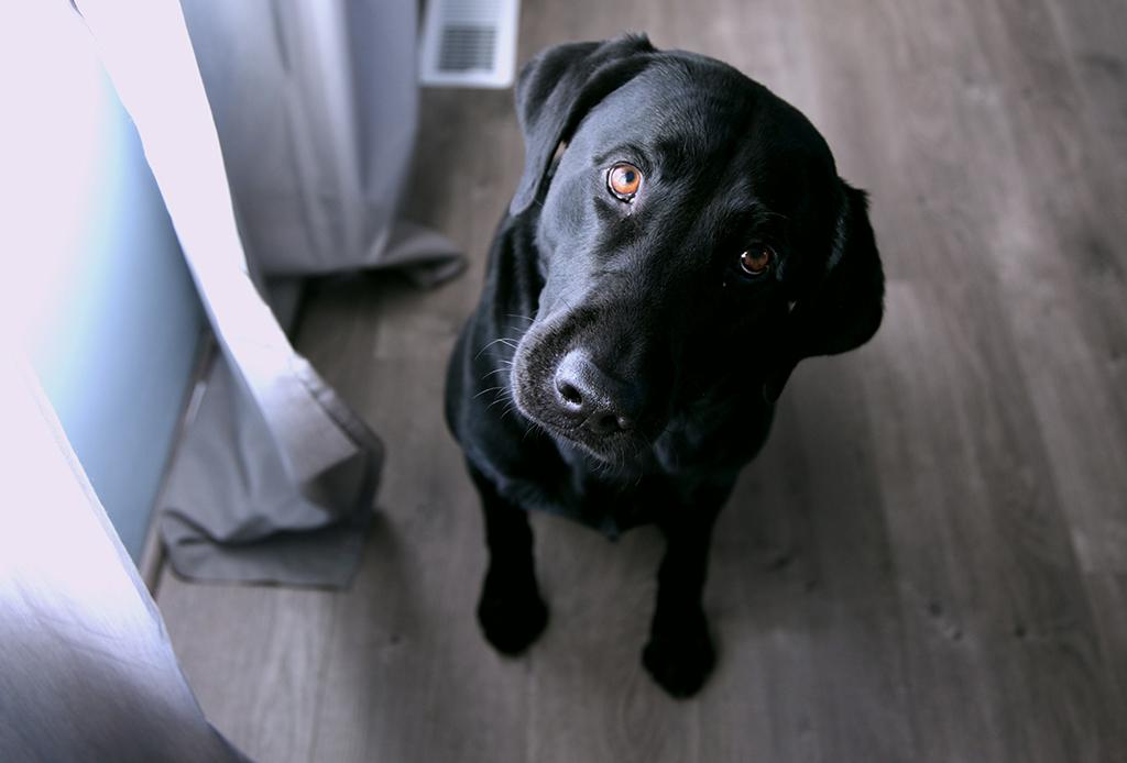 Estas son las maneras en las que tu perro te dice que te quiere - corporal-perros