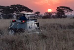 Ponle ambiente a un viaje en safari con esta playlist