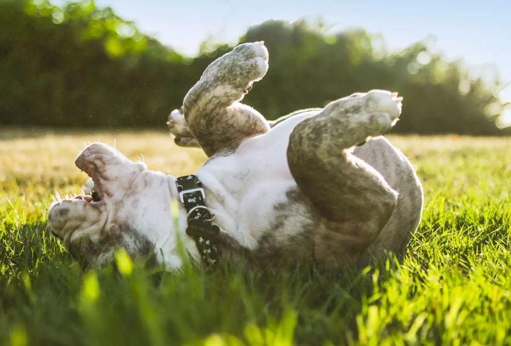 ¿No puedes pasear a tu perrito? Con estas apps podrás encontrar ayuda - trucos-perro-3-1024x694