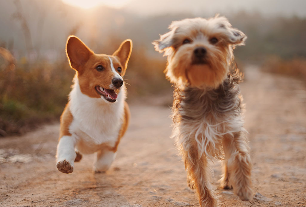 ¿No puedes pasear a tu perrito? Con estas apps podrás encontrar ayuda - trucos-perro-1024x694