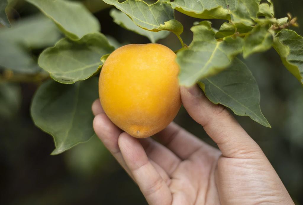 ¿Sabes qué es la gastronomía sustentable y cómo unirte a esta tendencia?