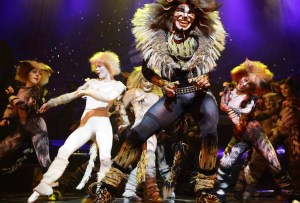 Perfectos Desconocidos - cats