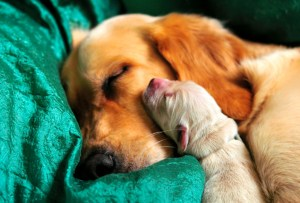 ¿Qué cuidados debes de tener cuando tu mascota está embarazada?