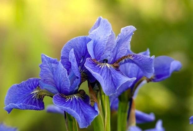 Los botánicos con mayores beneficios que debes buscar en tus productos de skincare - iris
