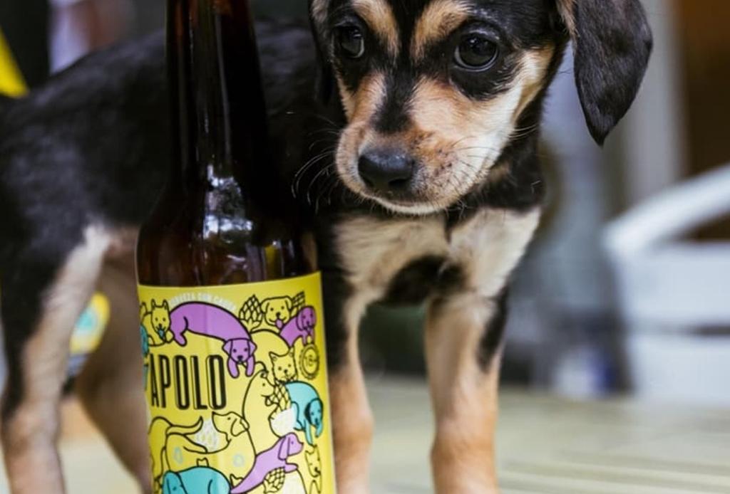 Esta cerveza mexicana ayuda a perritos de la calle