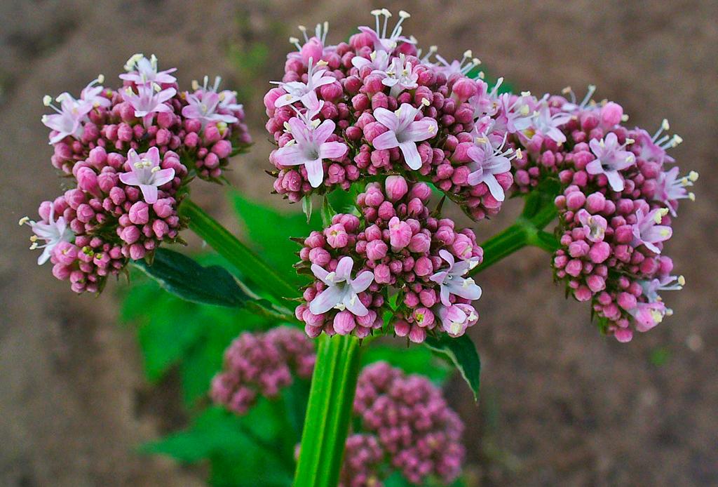 Suplementos herbales que te ayudarán a cuidar y mejorar tu salud - herbales-5-1024x694