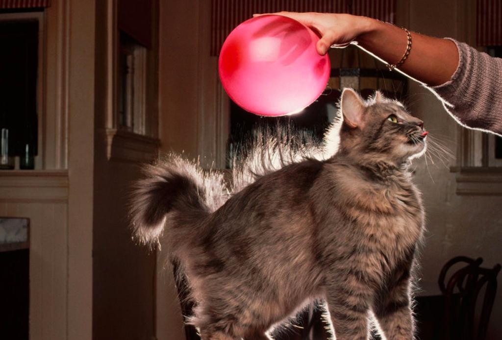 5 trucos fáciles para quitar pelos de tu mascota - pelo-mascota-3-1024x694