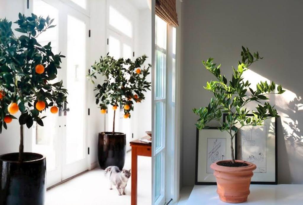 ¿Árboles dentro de casa? Así es como puedes integrarlos a tu decoración - arboles-interiores-2-1024x694