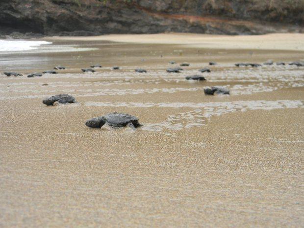 Lugares en México en los que puedes liberar tortugas - dscn3333