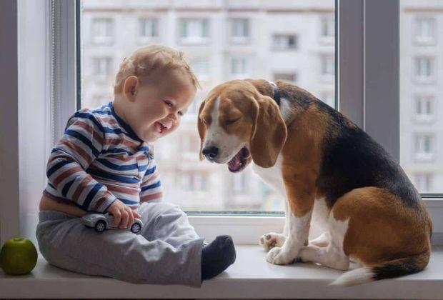 Tips para mantener a tu perro feliz en un departamento - perro-departamento